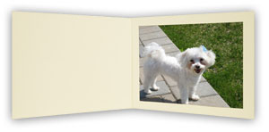 B. Oshrin The FIRENZA IVORY Photo Folder 8x10 (Pack of 25)